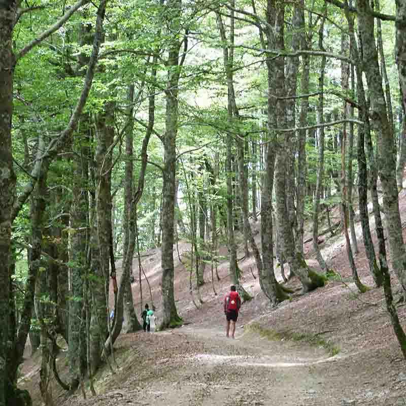 camino de santiago etapa roncesvalles zubiri